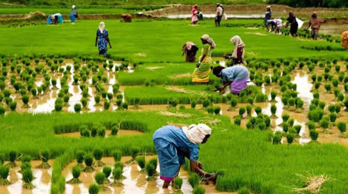 list of agriculture and agricultural grants like International fund for agricultural development
